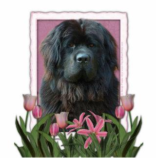 Mutter-Tag - rosa Tulpen - Neufundland Freistehende Fotoskulptur