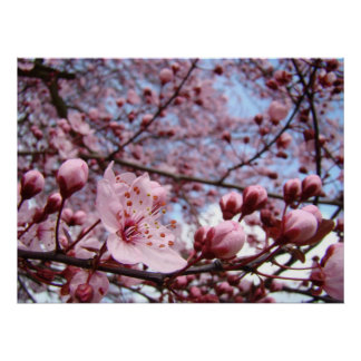 MUTTER-TAGESgeschenke Frühlings-Blüten-Kunst-Druck Poster