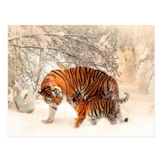 Mutter-Tiger und CUB im Snowy-Holz Postkarten