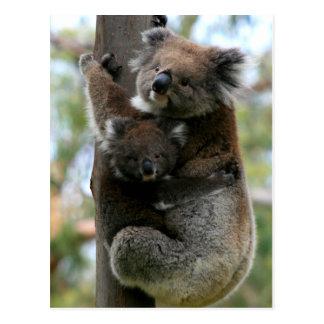 Mutter-und Baby-Koala Postkarte