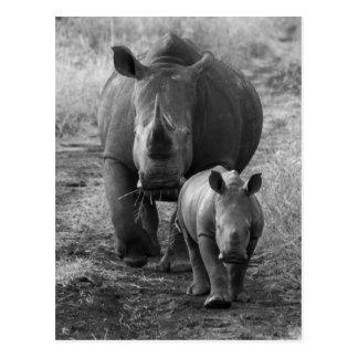 Mutter-und Baby-Nashorn-Postkarte Postkarte