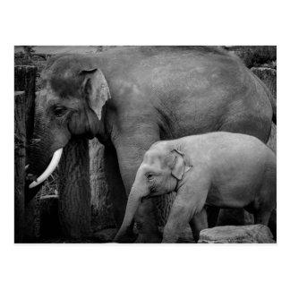 Mutter- und Babyelefant Postkarte