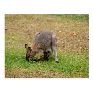 Mutterund Babyhübscher gegenübergestellter Wallaby Postkarte