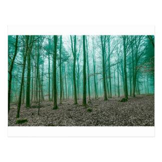 Mystischer Wald im Nebel im Grün Postkarten