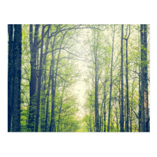 Mystischer Wald Postkarte