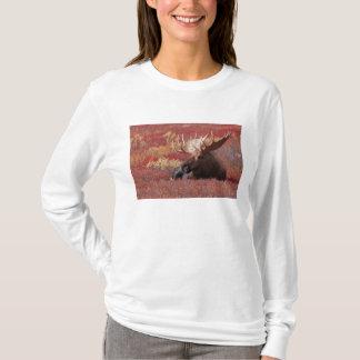 N.A., USA, Alaska, Denali Nationalpark, Stier T-Shirt