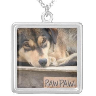 N.A., USA, Alaska. Heisere Schlittenhunde bei 2 Versilberte Kette