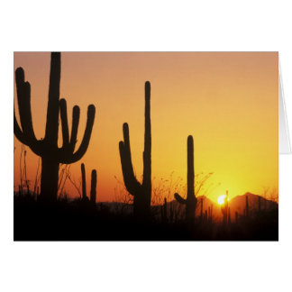 N.A., USA, AZ, Saguaro NP, Saguaro-Sonnenuntergang Karte