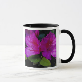 N.A. USA, Georgia, Savanne. Azalee in der Blüte Tasse