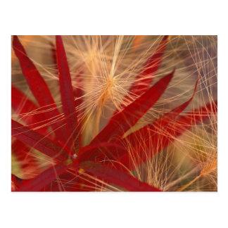 Na, USA, Alaska, Denali NP, Fireweed und wildes Postkarte