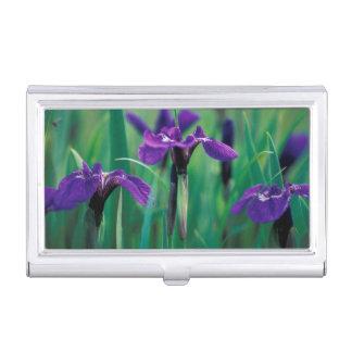 Na, USA, Alaska, Ritter-Insel, wilde Iris Visitenkarten Etui