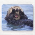Na, USA, Alaska. Seeotter sind das größte Mousepad