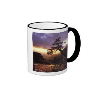 Na, USA, Arizona, Tucson, Sonnenuntergang und Ringer Tasse