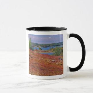 Na, USA, Maine. Blaubeere Barrens. Tasse