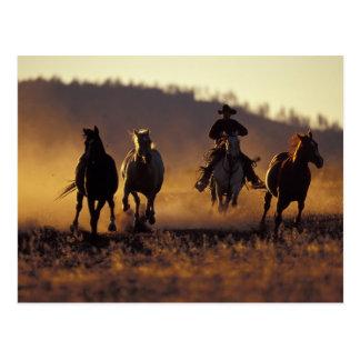 Na, USA, Oregon, Seneca, Ponderosa Ranch, Cowboy 2 Postkarte