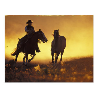 Na, USA, Oregon, Seneca, Ponderosa Ranch, Cowboy 3 Postkarte