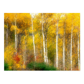 Na, USA, Washington, Fallaspen-Bäume entlang Postkarte
