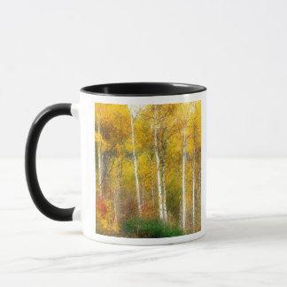 Na, USA, Washington, Fallaspen-Bäume entlang Tasse
