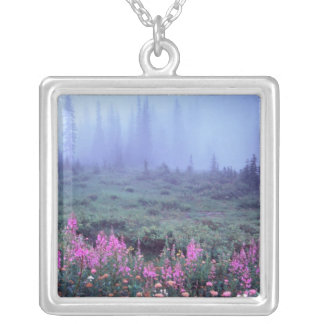 Na, USA, Washington, nebelige alpine Wiese, Mt. Versilberte Kette