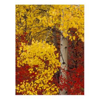 Na, USA, Washington, Wenatchee nationaler Wald Postkarte