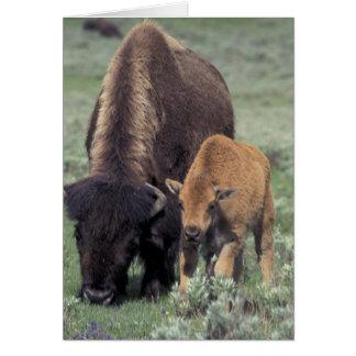 Na, Yellowstone Nationalpark USA, Wyoming, Karte