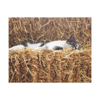 Nachmittags-Katzen-Nickerchen Leinwanddruck