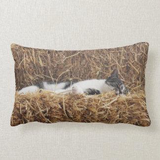 Nachmittags-Katzen-Nickerchen Lendenkissen