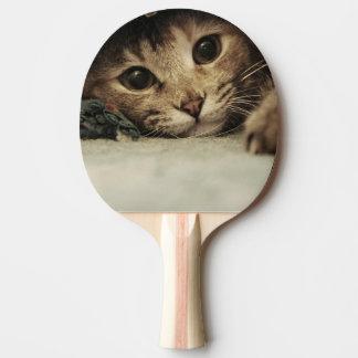 Nah oben von den Katzenaugen eines Tabby Tischtennis Schläger