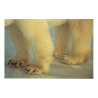 Nah oben von den polarer Bärn-Füßen Holzwanddeko