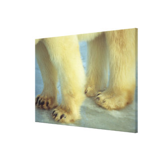 Nah oben von den polarer Bärn-Füßen Leinwanddruck