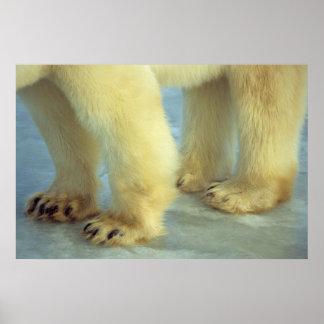 Nah oben von den polarer Bärn-Füßen Poster