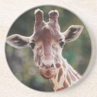 Nah oben von der retikulierten Giraffe Sandstein Untersetzer