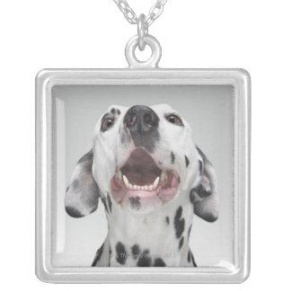 Nah oben von einem dalmatinischen Hund Versilberte Kette
