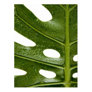 Nah oben von einem grünen Palmblatt mit Wasser Postkarte