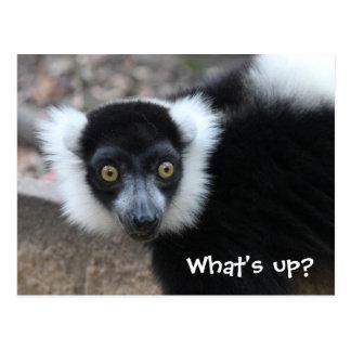 Nah oben von einem Schwarzweiss-Ruffed Lemur Postkarte