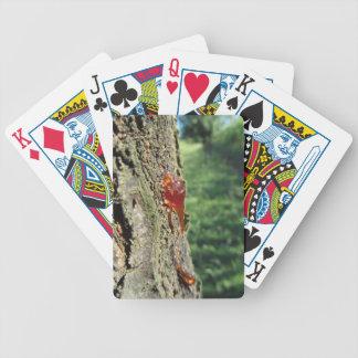 Nahaufnahme der Birnenbaumausscheidung des Bicycle Spielkarten