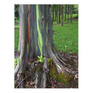 Nahaufnahme der bunten Eukalyptus-Baumrinde Postkarte