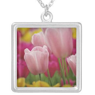 Nahaufnahme der Tulpe-Blume, Kuekenhof Gärten, Versilberte Kette