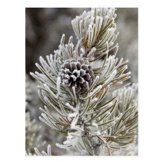 Nahaufnahme des gefrorenen Kiefernkegels, Postkarte