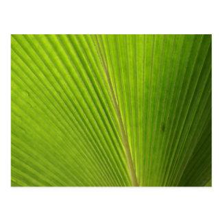 Nahaufnahme des Palmblattes Postkarte
