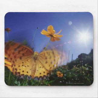 Nahaufnahme des Schmetterlinges, Flügel flatternd Mousepad
