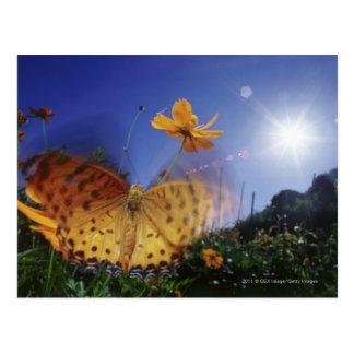 Nahaufnahme des Schmetterlinges, Flügel flatternd Postkarte