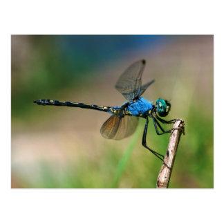Nahaufnahme einer blauen Drache-Fliege auf einer Postkarte