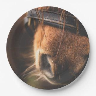 Nahaufnahme einer niedlichen Brown-Pferdenase Pappteller