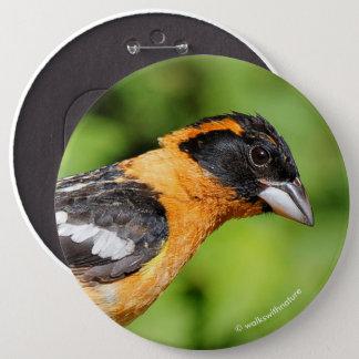 Nahaufnahme eines hübschen schwarzköpfigen runder button 15,3 cm