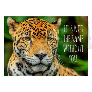 Nahaufnahme eines Jaguargesichtes, Belize Karte