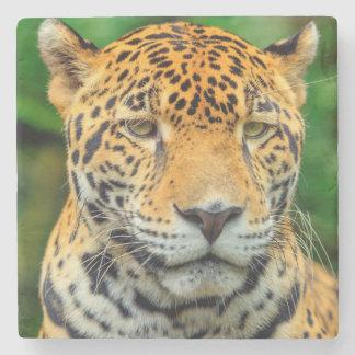 Nahaufnahme eines Jaguargesichtes, Belize Steinuntersetzer
