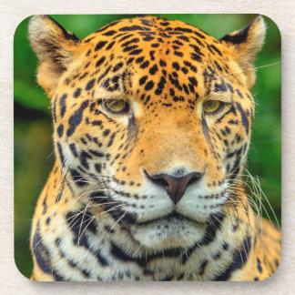 Nahaufnahme eines Jaguargesichtes, Belize Untersetzer