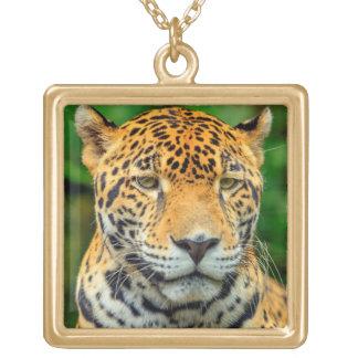Nahaufnahme eines Jaguargesichtes, Belize Vergoldete Kette