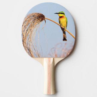Nahaufnahme eines kleinen Bieneesser Vogels Tischtennis Schläger